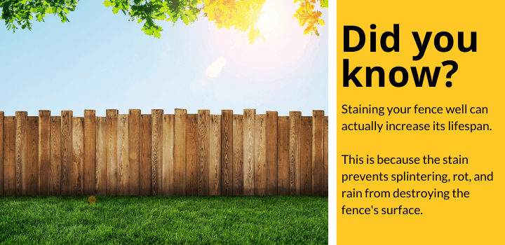 Did you know: Staining your fence well can actually increase its lifespan.  This is because the stain prevents splintering, rot, and rain from destroying the fence's surface.
