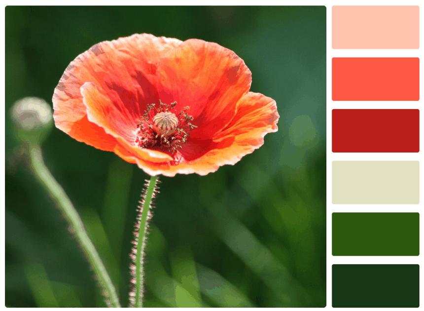 Flower color palette